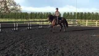 SOLD--  Shadow Soldier - Shadow Sports Horses