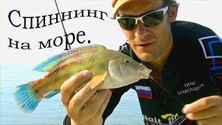 Что можно поймать в черном море с берега