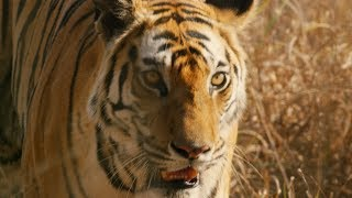 Dynasties: DVD and Blu-Ray Trailer | BBC Earth