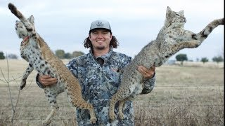 Texas BOBCAT Catch Clean Cook!! (HUNTING WITH AIR RIFLE)