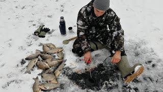 Рыбалка зимой ОНИ УТАСКИВАЮТ УДОЧКИ И НЕ ЛЕЗУТ В ЛУНКУ!!!