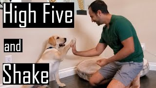 How to Train Handshake and High Five to your Puppy or Dog (Easy Dog Training)