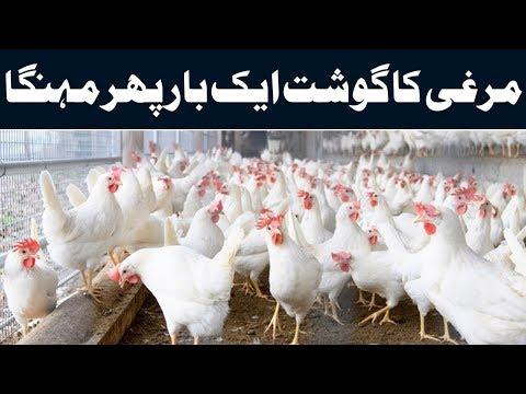chicken price,price in lahore broiler