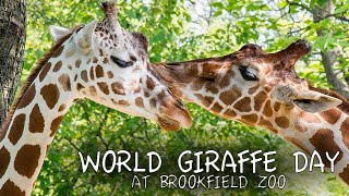 Giraffes Being Giraffes on World Giraffe Day