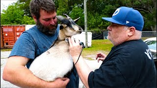 World's Greatest Goat Barber (Bubba Nomad Barber)