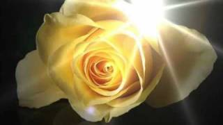 Yellow Rose of Texas ::: Johnny Horton (sorry, make that Bobby) and Lyrics