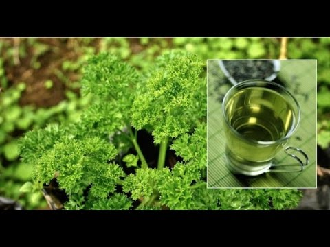Video 100% Natural Urinary Tract Infection Cure – Just One Ingredient