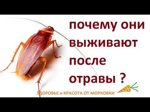 , title : 'почему борная кислота НЕ ДЕЙСТВУЕТ НА ТАРАКАНОВ ???