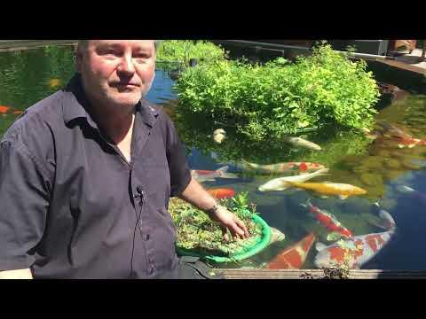 Schwimmende Pflanzinsel richtig bepflanzen - Teichinsel & winterharte Pflanzen für Koiteich