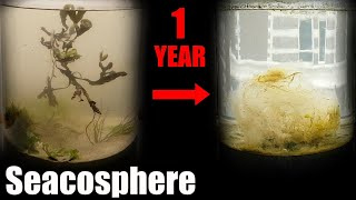 A Year Ago I Put Saltwater in a Jar, This Happened  |  Natural saltwater ecosphere 1 year update