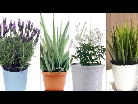 5 Pflanzen, die du in deinem Schlafzimmer haben solltest, um besser schlafen zu können!