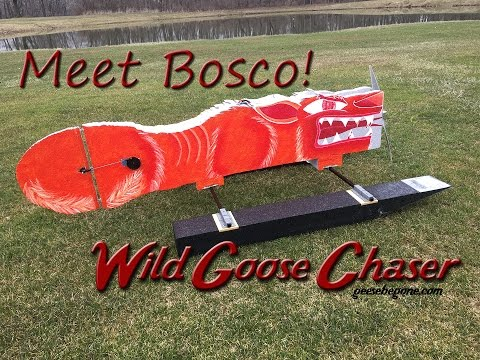 bosco-the-wild-goose-chaser