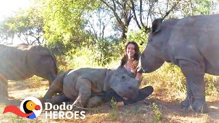 Watch This Baby Rhino Fall In love With Her Rescuer's Cat   The Dodo Heroes
