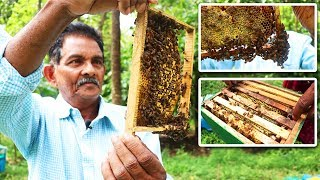 ഒന്നര ലക്ഷം തേൻ കൃഷിയിലൂടെ  സീസണിൽ വരുമാനം honey bee farming in kerala part 2