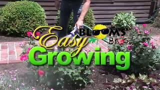 EZ Growing Week 8 - Rose Slugs