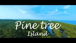 Pine tree island | Winter season of south | GoPro Cinematic FPV Freestyle | TBS crossfire