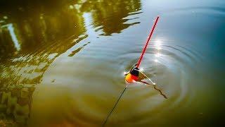 Активный клев карася на утренней зорьке!Душевная вышла рыбалка!Карась на поплавок.