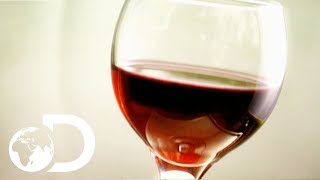 WINE | How It's Made