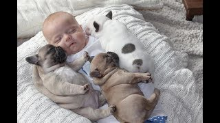 Cute Dogs Babysitting Dog And Baby Sleeping Together Compilation 2017