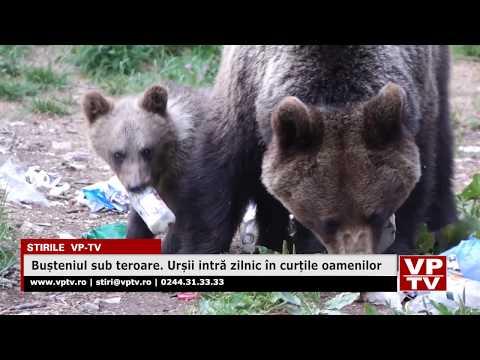 Bușteniul sub teroare. Urșii intră zilnic în curțile oamenilor