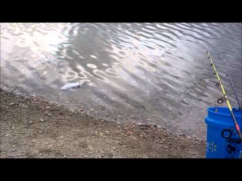 TeamCatfish Baits Bait-Off: 8/26/13 Jordon River/Willow Pond Fishing Trip