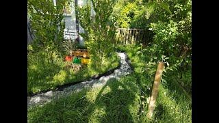 Einen pflegeleichten Waldgarten statt Rasen! So geht's! Vorher / Nachher
