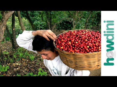 Fair Trade Coffee: How to buy fair trade coffee