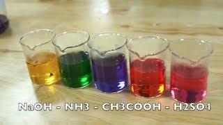 TYHH - Dùng cải tím để thay đổi màu dung dịch theo pH