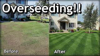 How To OVERSEED Your Lawn in SPRING // Complete Step by Step Guide