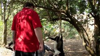 Killing and Skinning a Goat in African Village