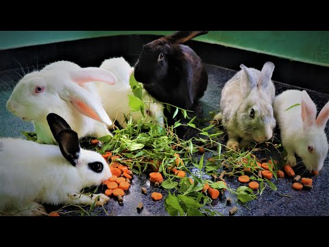 , title : 'Rabbit Farming a Profitable Business/Full Process For Rabbit Farming