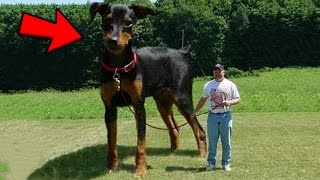 Top 10 Abnormally Large Animals YOU WON