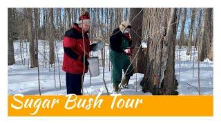 Sugar Bush Tour