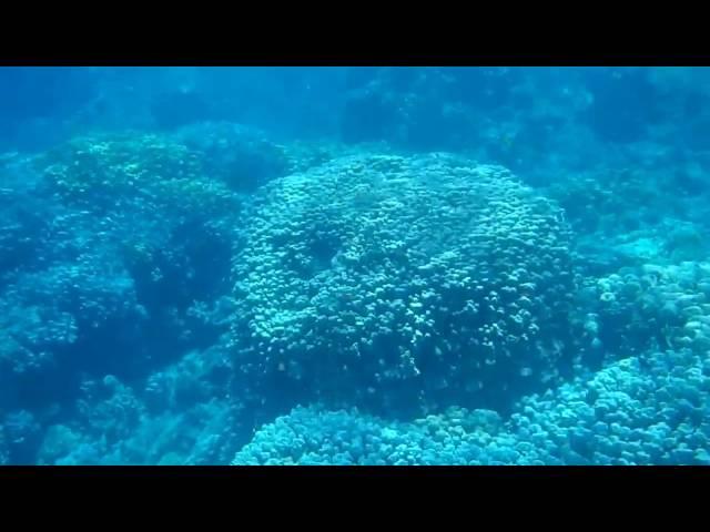 Coral reef snorkeling near Safaga, Soma Bay, Egypt, Red Sea (HD) #1