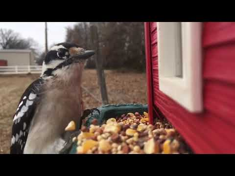 I duct tape a old iPhone to a bird feeder and took slow motion video