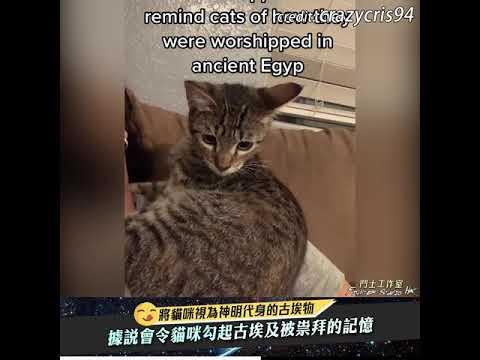 這麼多貓都有反應好神奇