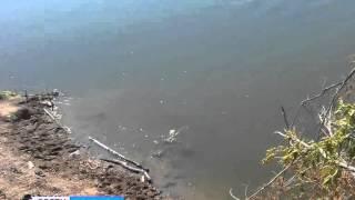 В Переволоцком районе утонул ребенок