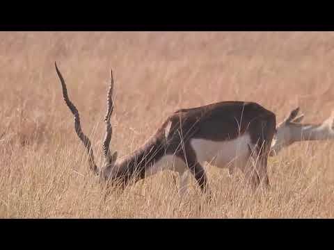 Gujarat Wildlife & Safari Excursions
