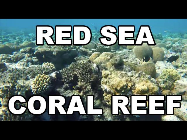 Red Sea (Eilat) - Coral Reef - Snorkeling