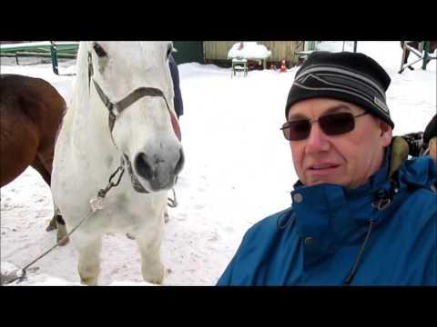 """Советы доктора Тропинкина: польза от общения с лошадью. Конный клуб """"Кардинал""""."""