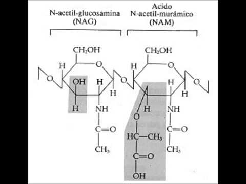 El aceite del lino en las cápsulas para el adelgazamiento las revocaciones