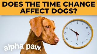 Does The Time Change Affect Dogs?