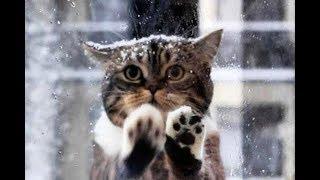 Кошка просила помощи у людей, в коробке замерзали её маленькие котята