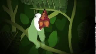 Luna Moth Transformation Animation