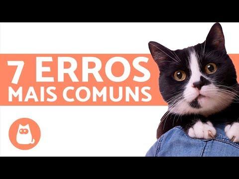 Cuidados Necessários Ao Cuidar de Gatos