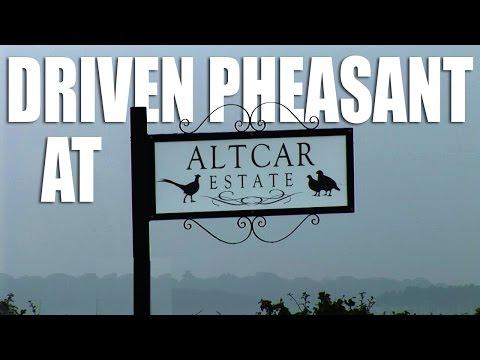 Driven Pheasant at Altcar Estate