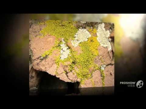 Paggamot ng kuko halamang-singaw terbinafine