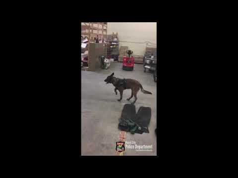 Police dogs first time wearing winter boots