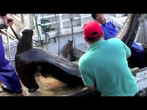 The Horrors Of Shark Finning