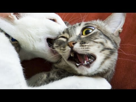 😁 Funniest 🐶 Dogs and 😻 Cats - Awesome and Funniest Animals Videos 2019